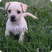 Adopt A Pet :: Ollie Edwards - Sacramento, CA