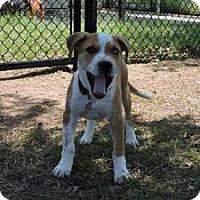 Adopt A Pet :: Yogi - Berkeley Heights, NJ