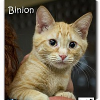 Adopt A Pet :: Binion - Albuquerque, NM