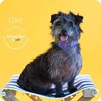 Adopt A Pet :: Ethel - Visalia, CA