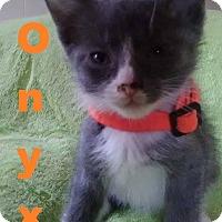 Adopt A Pet :: Onyx - Flint, MI