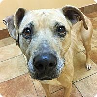 Adopt A Pet :: Ida - Appleton, WI