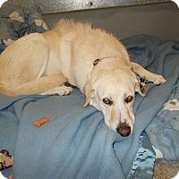 Adopt A Pet :: Daisy - Lemoore, CA