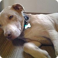 Adopt A Pet :: Heath - East Randolph, VT
