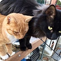 Adopt A Pet :: BOBBI and MONTY - Beverly, MA