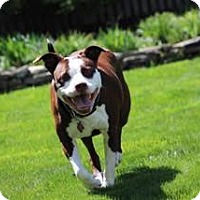 Adopt A Pet :: Nugget FKA slice - Philadelphia, PA