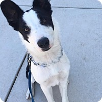 Adopt A Pet :: CHEWY (Courtesy List) - San Pedro, CA