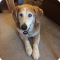 Adopt A Pet :: Karuso - Pending Adoption - Lancaster, PA