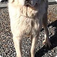 Adopt A Pet :: Hannah - Orange Cove, CA