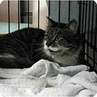 Adopt A Pet :: Stormy - Westfield, MA