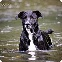 Adopt A Pet :: Rhi Rhi the water dog - Albany, NY