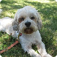 Adopt A Pet :: Mugs - Rigaud, QC