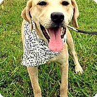 Adopt A Pet :: ADDIE - Leland, MS