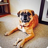 Adopt A Pet :: Kalvin - Austin, TX