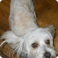 Adopt A Pet :: Annie - dewey, AZ