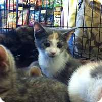Adopt A Pet :: Caroline - Caistor Centre, ON