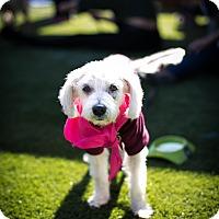 Adopt A Pet :: Nettie Pie - Los Angeles, CA