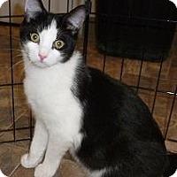 Adopt A Pet :: Kyle - Massapequa, NY