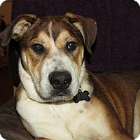 Adopt A Pet :: Dexter- ADOPTION PENDING! - Wood Dale, IL