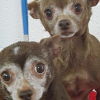 Adopt A Pet :: Peanut & Booties - chaparral, NM
