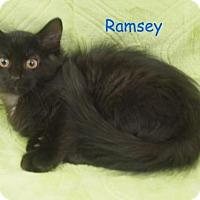 Adopt A Pet :: Ramsey - Elkhorn, WI