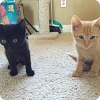 Adopt A Pet :: Sansa - Walnut Creek, CA
