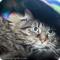 Adopt A Pet :: Chessie - Wellesley, MA