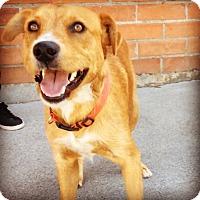 Adopt A Pet :: COWBOY (video) - Los Angeles, CA