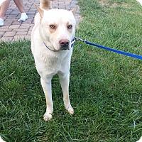 Adopt A Pet :: Rocky - Loveland, OH