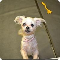 Adopt A Pet :: Buffy - Tavares, FL