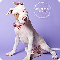 Adopt A Pet :: Roosevelt - Apache Junction, AZ