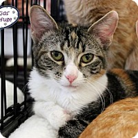 Adopt A Pet :: Elena - Lee's Summit, MO