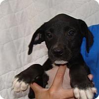 Adopt A Pet :: Spring - Oviedo, FL