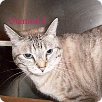 Adopt A Pet :: Diamond - El Cajon, CA