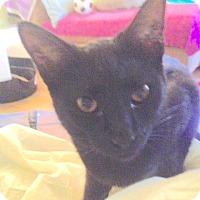 Adopt A Pet :: Sambuka - San Leandro, CA