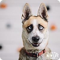 Adopt A Pet :: Eileen - Portland, OR
