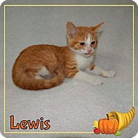 Adopt A Pet :: Lewis - Buffalo, IN