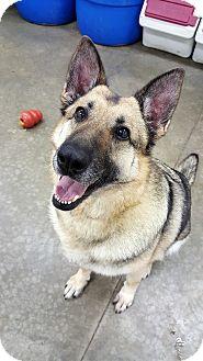 German Shepherd Dog Mix Dog for adoption in Lake Odessa, Michigan - Ginger