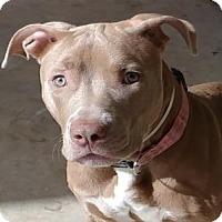 Adopt A Pet :: MILLIE - West Palm Beach, FL