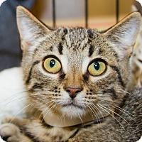 Adopt A Pet :: Fleetwood - Irvine, CA