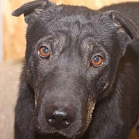 Adopt A Pet :: Monet - Rossville, TN