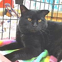 Adopt A Pet :: Buddy - E. Claridon, OH