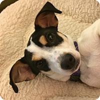 Adopt A Pet :: Cookie - Sunnyvale, CA