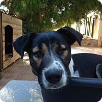 Adopt A Pet :: Lora - Toronto, ON