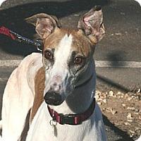 Adopt A Pet :: Drift - Santa Rosa, CA