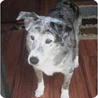 Adopt A Pet :: Nellie - Orlando, FL