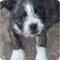 Adopt A Pet :: Teppenpaw - Allentown, PA