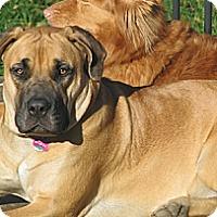 Adopt A Pet :: Aslandi