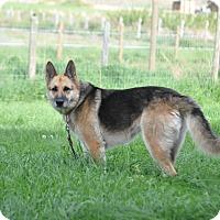 Adopt A Pet :: Skye - Hamilton, MT