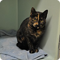 Adopt A Pet :: Brownie - Rockaway, NJ